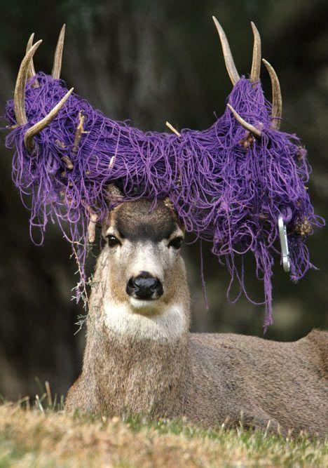 yarndeer